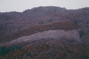 Clearing Rain, Kakadu. 1995-97. Oil on linen, 1520x2280mm.