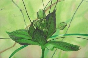 January - Tacca 2, [ Tacca leontopetaloides ], 40x60cm, oil on cotton