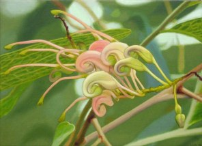 January – Grevillea flower, [ Grevillea decurrens ], 31x41cm, oil on linen