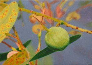 February – Grevillea nut 1, [ Grevillea decurrens ], 28x38cm, oil on cotton