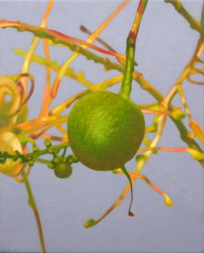 February – Grevillea nut 2 , [ Grevillea decurrens ], 50x40cm, oil on cotton