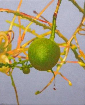 February – Grevillea nut 2 , [ Grevillea decurrens ], 50x40cm, oil on cotton