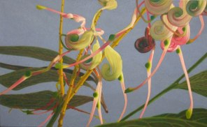 March – Grevillea flowers 1, [ Grevillea decurrens ], 60x100cm, oil on cotton