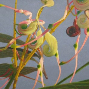 March – Grevillea flowers 1, [ Grevillea decurrens ], 60x100cm, oil on cotton