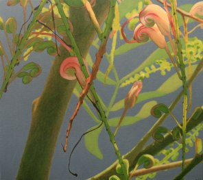 March – Grevillea flowers 2, [ Grevillea decurrens ], 80x90cm, oil on linen
