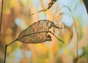 June – Eucalyptus leaf, [Stringybark – Eucalyptus tetradonta], 34x56cm, oil on linen