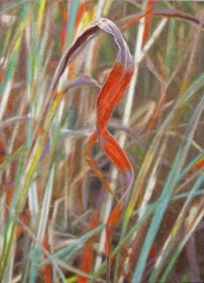 July – spiral Gamba grass leaf, [ Andropogon gayanus ], 56x40cm, oil on linen