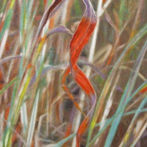 July – spiral Gamba grass leaf, [ Andropogon gayanus ], 56x40cm, oil on linen