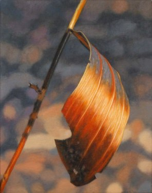 October – curled scorched leaf, [ Acacia holoserica ], 36x28cm, oil on linen