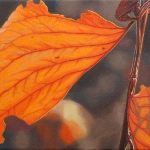 October – scorched Elephant Ear wattle leaves, [ Acacia dunnii ], 30x41cm, oil on linen